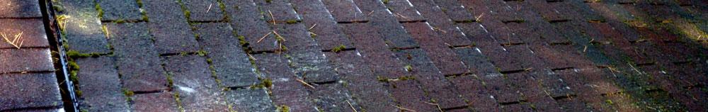 algae roof stains