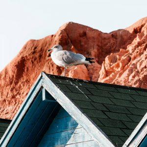 bleaching a roof